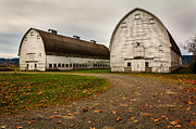 Jean_okeeffe Photos - Nisqually Twin Barns - Architecture by Jean OKeeffe by Jean OKeeffe