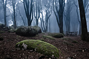 Nature Photos - No one by Jorge Maia