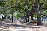 Park Benches Photo Originals - No This Is Not Paris  by Judith Russell-Tooth