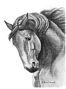 Horses Drawings - Noble by Renee Forth Fukumoto