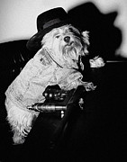 Noir Digital Art - Noir Gangster Dog by Susan Stone