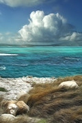 Seascape Digital Art Metal Prints - Nonsuch Bay Antigua Metal Print by John Edwards