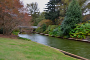 Norfolk; Paintings - Norfolk Botanical Gardens Canal 3 by Lanjee Chee
