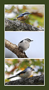 Collages Prints - North American Birds Print by Christina Rollo