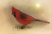 Soft Color Print Prints - North American Cardinal Print by Tom York