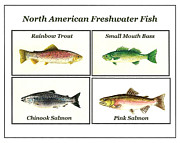 Trout Paintings - North American Freshwater Fish by Michael Vigliotti