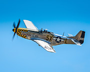 North American P51 Mustang Prints - North American P-51D Mustang  Print by Puget  Exposure