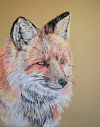 Colorado Wildlife Pastels Framed Prints - North American Red Fox Framed Print by Ann Marie Chaffin