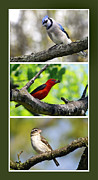 Trio Digital Art Posters - North American Songbirds Poster by Christina Rollo