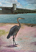 Philip Gianni - North bridge Siesta Key...