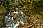 North Cascades Prints - North Cascades Creek Print by Adam Jewell