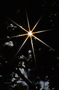 Star Gazing Posters - North Poster by Donna Blackhall