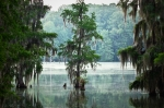 Eerie Prints - North Florida Cypress Swamp Print by Rich Leighton