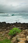 Charmian Vistaunet - North Shore Seascape