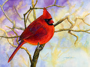 Hailey E Herrera Posters - Northern Cardinal Poster by Hailey E Herrera