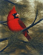 Pine Trees Art - Northern Cardinal by Rick Bainbridge