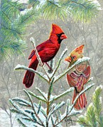 Pine Needles Drawings Posters - Northern Cardinals Poster by Marilyn Smith