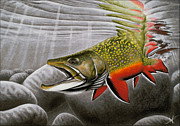 Fish Drawings - Northern Exposure by Nick Laferriere