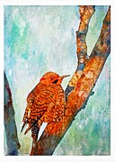 Debbie Portwood - Northern Flicker in...