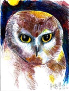 Saw Drawings Prints - Northern Saw Whet Owl  Print by Jon Baldwin  Art