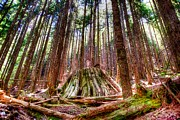Spencer Photo Prints - Northwest Old Growth Print by Spencer McDonald