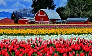 Pink Tulips Photos - Northwest Splendor by Benjamin Yeager