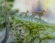 Tracy Herrmann - Northwoods Spring Deer