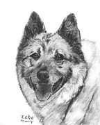 Original Print Drawings Originals - Norwegian Elkhound Sketch by Kate Sumners