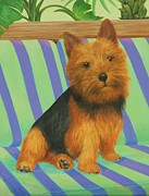 Bonnie Golden - Norwich Terrier