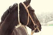 Horse Portrait Photos - Nostalgic by Jenny Rainbow