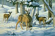 Not This Year - Mule Deer Print by Paul Krapf