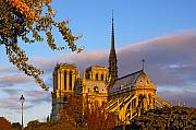 Ile De La Cite Art - Notre Dame Sunrise by Mick Burkey