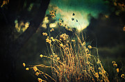 Dreamy Floral Fine Art Photos - Nouvelle Vague II by Taylan Soyturk