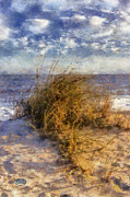 Beach Themed Art Posters - November Dune Grass Poster by Daniel Eskridge