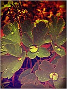 Wild Strawberries Framed Prints - November Rain Framed Print by Jeremiah Colley