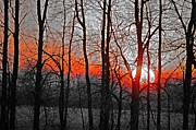Branches Pyrography Posters - November Sunset Poster by Adam Younk