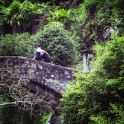 Stone Bridge Photos - Nowhere Man by Joana Kruse