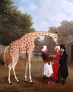 Famous Artists - Nubian Giraffe by Jacques-Laurent Agasse