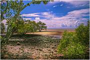 Nudgee Beach Queensland  Australia Print by Donah Beckhouse