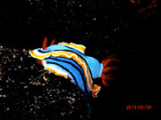 Featured Pyrography - Nudibranco 3 by Roberta Sassu