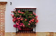 White Walls Posters - Number 9 - Geraniums in the Window Poster by Mary Machare