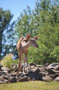 Nyala Print by Angela Doelling AD DESIGN Photo and PhotoArt