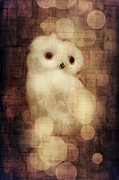Texturing Posters - O Owly Night Poster by Loriental Photography