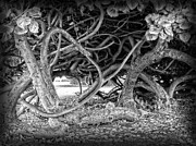 Vines Prints - Oahu Ground Vines - Hawaii Print by Daniel Hagerman