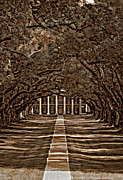 Oaks Digital Art Framed Prints - Oak Alley bw Framed Print by Steve Harrington