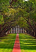 Live Oaks Digital Art Framed Prints - Oak Alley II Framed Print by Steve Harrington