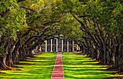 Oak Alley Paint  Print by Steve Harrington
