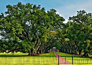 Live Oaks Digital Art Framed Prints - Oak Alley Plantation 2 Framed Print by Steve Harrington