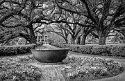 Kathleen K Parker - Oak Alley Plantation Landscape in bw