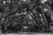 Slaves Framed Prints - Oak Alley Plantation Framed Print by Photo Advocate